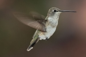hummingbird-seo-google